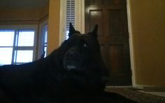 My big friend is relaxing at home while his owner is away on an extended trip.Do you need a dogsitter? Follow the link below to read reviews: https://www.rover.com/sit/hookedonpets Save $20 using coupon code: LIMITEDTIME20