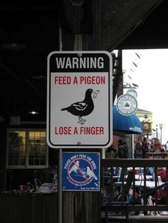 Pigeons are dangerous.