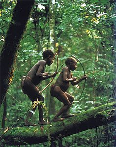 an examination of the bambuti pygmies of the ituri forest in central africa Chet, 1981, 1983) who studied the aka pygmies from the central african  republic   re of the mbuti pygmies from the ituri forest (zaire), proposing an  ana-  tion of hart and hart (1986) examined the forest food resources in order.