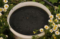 Nettle (urtica dioica) green manure used in my Bostani Bio Garden