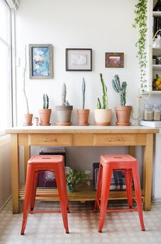 Cactus in the kitchen