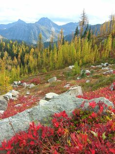 Hiking Trail - Twisp Pass | North Cascades NP, WA, by Craig Romano