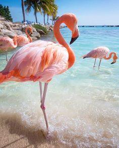 Gorgeous pink flamingos, always stunning bird photography here!