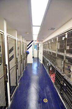 Veterinary hospital kennel/ward