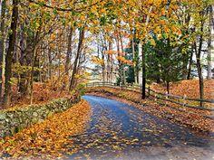 Leaf Peeping Season: Massachusetts Foliage Guide