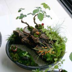 豊穰の里山の苔盆景2 Bonsai Art, Bonsai Garden, Garden Plants, Little Gardens, Small Gardens, Aquarium Garden, Indoor Fairy Gardens, Container Water Gardens, Moss Plant