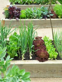 Low Raised Beds Obvious Choice for Gardening Leafy Crops | hgtv.com