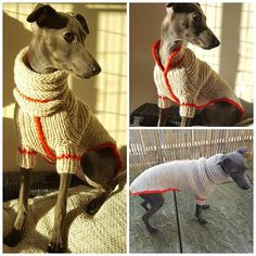 @gile modeling hand knitted wool sweater+snood  ✔FOR SALE!! (Website coming soon) #IG #iggy #italiangreyhound #iggys #puppy #puppylove #puppyinstagram #dog #cute #puppydog #levretki #levrete #instadog #instaiggy #instadogs #dogfashion #cuteness #cute