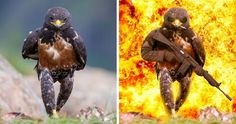 The Winners Of The Greatest Photoshop Battles Ever