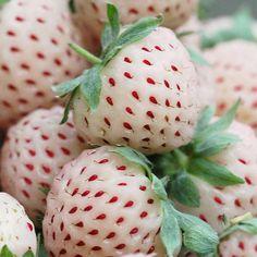 Pineberry- White strawberry that tastes like pineapple!