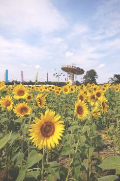 Photo Diary: Secret Garden Party (via Bloglovin.com )