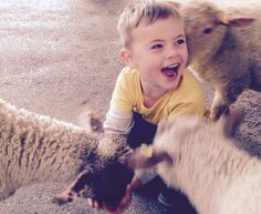 Hand feeding lambs is such fun at Farmer Palmer's Farm Park in Poole | Dorset UK. Kids days out.