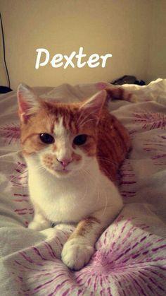 Dexter. Sashas cat