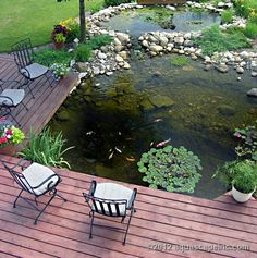 Backyard deck is cantilevered over water garden for ideal viewing of fish and aquatic plants.
