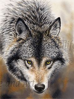 """Timber Wolf Canvas Art Print - """"Nature's Beauty""""                                                                                                                                                                                 More"""