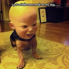 NNNnnnooooo  - funny pictures #funnypictures