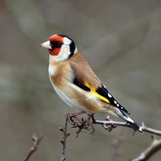pictures of birds - Yahoo! Search Results