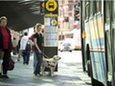 Ebből az ausztrál kis filmből is láthatjuk, hogy mennyivel önállóbb, függetlenebb, biztonságosabb és gyorsabb a közlekedés vakvezető kutyával, mint a hosszú fehér bottal. Sajnos Magyarországon a látássérült emberek alig 1%-át segíti vakvezető kutya :( További információk: vakvezeto.org