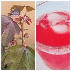 Roselle's refreshing #red #tea right from the backyard. #learnwdmom #gardening #summer