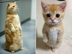 A toporgó macskákat végtelenítve fogod nézni |