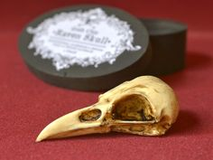 Crow Raven Skull in a handmade wooden box - Realistic Goth Oddities home decor for sale by Goth Chic at MoreThanHorror.com