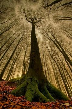 Magnificent tree!