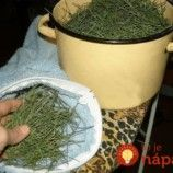 Archívy Recepty - Page 3 of 786 - To je nápad! How To Dry Basil, Planter Pots, Herbs, Owl, Toe, Owls, Herb, Medicinal Plants