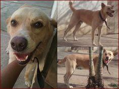 G.A.R.R.A. - Grupo de Ação, Resgate e Reabilitação Animal: Precisamos de ajuda para castrar o Max!