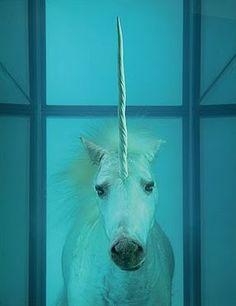 Unicorns exist....Damien Hirst......