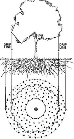 Randy Lemmon: Deep root feeding and watering of trees
