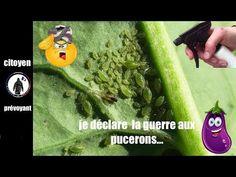 Comment se débarrasser des pucerons une fois pour toute ? - YouTube Insecticide, Plantation, Permaculture, Indian Art, Horticulture, Diy Crafts, Youtube, Gardens, Home