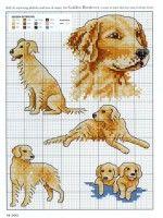 Gallery.ru / Фото #11 - Picture Your Pet - TATO4KA6