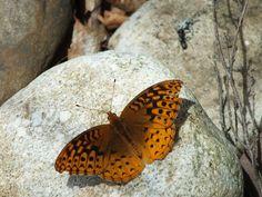 Butterfly on rock.