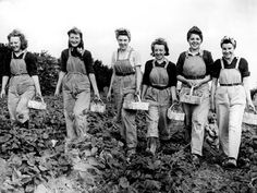 During both World Wars, many civilian women took up jobs in agriculture, replacing those men who went to war. The women who worked for the Women's Land Army (WLA) were commonly known as Land Girls. In forestry, Women's Timber Corps were known as Lumber Jills. At the height of the First World War the Land Army had a full-time membership of 23,000 members. The number exceeded 80,000 during the Second World War.