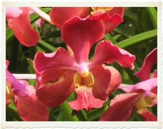More orchids from Thailand in Nov 2004