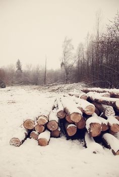 snow on timber// via flickr