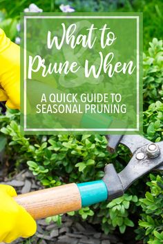 timing is everything your complete guide to pruning southern living plants - The world's most private search engine Gardening For Beginners, Gardening Tips, Hydroponic Gardening, Garden Compost, Gardening Zones, Gardening Supplies, Pruning Shrubs, Flowering Shrubs, Gardens
