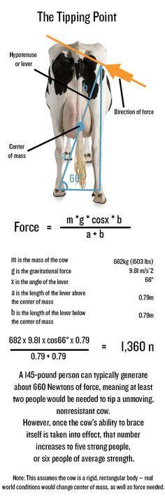 Cow Tipping: Fake or Really Fake? - Diagram adapted from Popular Mechanics, using the work of Dr. Margo Lillie and Tracy Boecher.