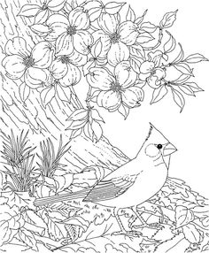 Free Printable Coloring PageNorth Carolina State Bird And Flower Cardinal D