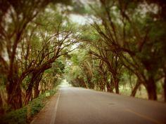 #Tree #Way #Tabasco