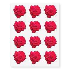 """Single Red Rose Approx. 2 1/2"""" Temporary Tattoos - Tattoos will arrive in a mirrored form to what you see above. When applied, it will be the right side up! Each sheet is: 10.5"""" (height) x 8.25"""" (width).. Prints in full color & non-colored areas are clear. Comes off after a few days or wipe clean with baby oil. To prolong tattoo, avoid chlorinated water. Do not use if you have sensitive skin or if you are allergic to adhesive. Not intended for children 12 and under. - $16.95 per sheet"""