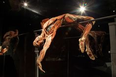 Happiness Project polstokspringen in Body Worlds: The Happiness Project.