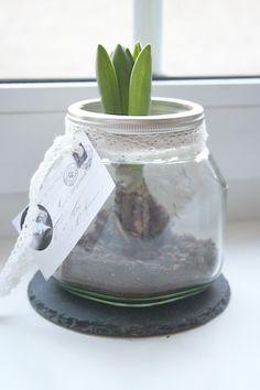 Hyazinthe im Glas - schlicht und wunderschön!