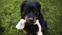 9 Things Dogs Teach Us About Life & Love