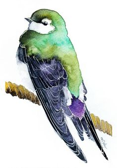 ARTFINDER: Swallow-Original watercolors by Karolina Kijak - Swallow, original watercolors painting Paper 200g, size 18x12cm Follow me on facebook: https://www.facebook.com/kijakwatercolors