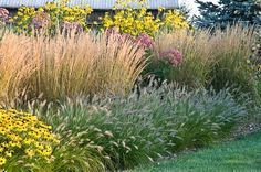 Country Gardener: August 2008 vEupatorium tucked in amongst Rudbeckia 'Herbstsonne,  Karl Foerster feather reed grass and fountain grass