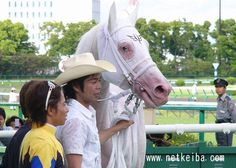 """White Vessel has one brown eye and the other is half brown, half blue (called a """"partial blue"""" eye). Horse Mane Braids, Olympic Equestrian, Horse Pattern, Racehorse, Clydesdale, White Horses, All Gods Creatures, Thoroughbred, Horse Tack"""