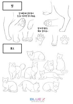 Animal Sketches, Animal Drawings, Art Sketches, Art Drawings, Cat Drawing Tutorial, Drawing Tips, Cat Reference, Drawing Reference, Manga Cat