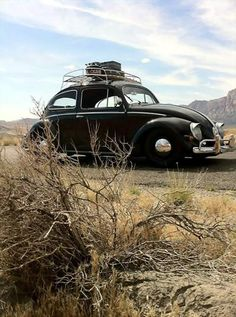 Here we are, family and camping gear, looking for an oasis somewhere in the the desert!  Good old VW Bugs!