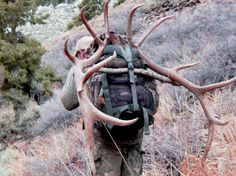 Packing out elk and deer.  Many animals have been broken down to just meat and antler and packed out in trips to the truck.  At times I have limited myself to where I would hunt elk, just because I was aware of  how many trips it would take to get the beast out if I killed one back there.